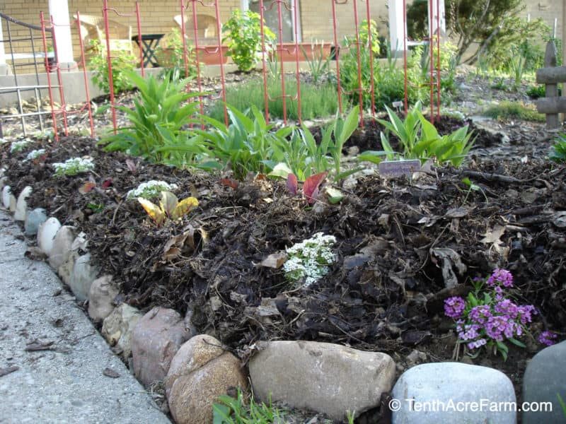 A garden bed mulched with shredded leaves.