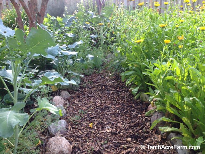 Permanent pathway in a no till garden