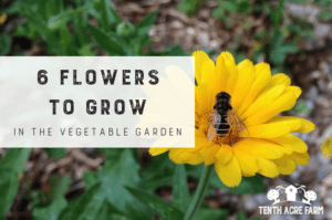 6 Flowers to Grow in the Vegetable Garden