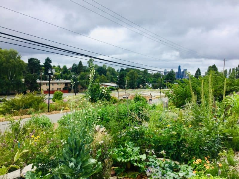 Urban Food Forests: Demonstrating Permaculture in the City — Food forests are permaculture gardens consisting of edible perennials. Find out how two urban food forests are shaking up the local food movement.