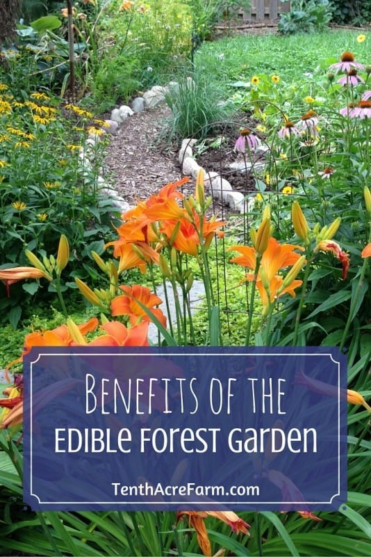 Benefits Of The Edible Forest Garden