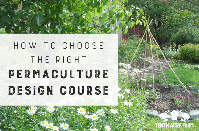 How to Choose the Right Permaculture Design Course: Looking for a permaculture design course?There are plenty to choose from—here's how to find the right permaculture course to meet your needs. #permaculture #permaculturedesign #suburbanpermaculture #permaculturegarden #gardening #gardentips