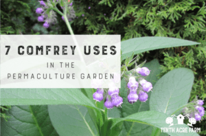7 Comfrey Uses in the Permaculture Garden: Comfrey fertilizer is considered a powerhouse in the permaculture garden. Here are seven comfrey uses for building healthy soil and growing healthy crops.