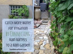 Catch More Water for Irrigation by Connecting Rain Barrels to a Rain Garden