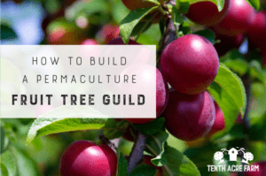 How to Build a Permaculture Fruit Tree Guild