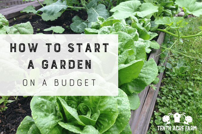 The materials you need to start a garden can add up in cost. Here are six ideas for starting a garden on a budget without breaking the bank. #microfarm #gardenplanning #growingvegetables #vegetablegarden #gardening #gardentips