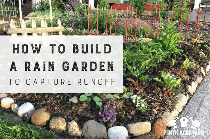Learn how to build a rain garden that captures rainwater runoff from hard surfaces, such as a roof or pavement, for irrigation or to reduce water pollution.
