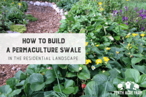 A permaculture swale is a technique for capturing and storing water in a garden. Learn how to build a swale in the residential landscape. #permaculture #irrigation