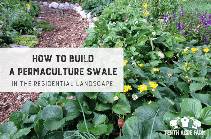 How to Build a Swale in the Residential Landscape [+ Free