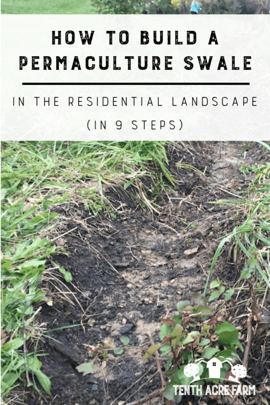 Learn how to build a permaculture swale to capture and store water in the residential landscape. #permaculture #irrigation