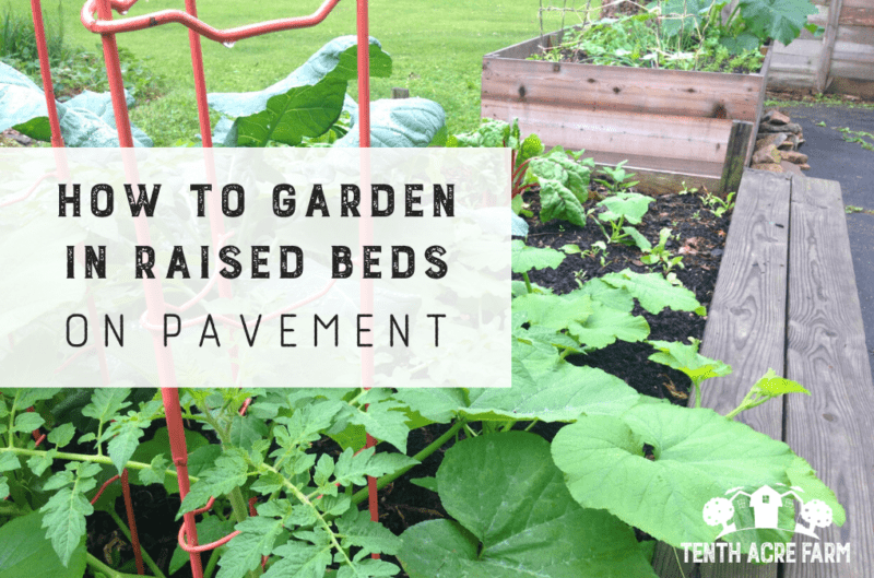 Raised beds on pavement is a strategy for gardeners with limited growing space. Learn how to grow food on paved surfaces such as concrete or asphalt.