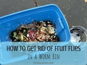 How to Get Rid of Fruit Flies in a Worm Bin