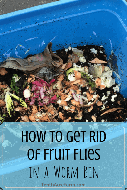 how to get rid of fruit flies in a worm bin tenth acre farm. Black Bedroom Furniture Sets. Home Design Ideas