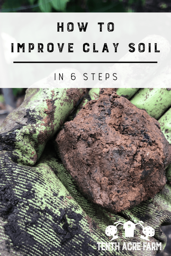 How to Improve Clay Soil in 6 Steps: Heavy clay soil can be frustrating. Follow this 6-step plan to improve soil so you can garden with ease and grow crops that thrive. #gardening