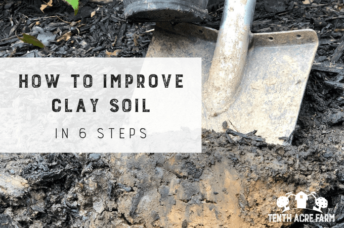 How to Improve Clay Soil in 6 Steps: Heavy clay soil can be frustrating. Follow this 6-step plan to improve soil so you can garden with ease and grow crops that thrive.