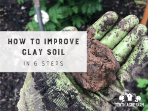 How to Improve Clay Soil in 6 Steps