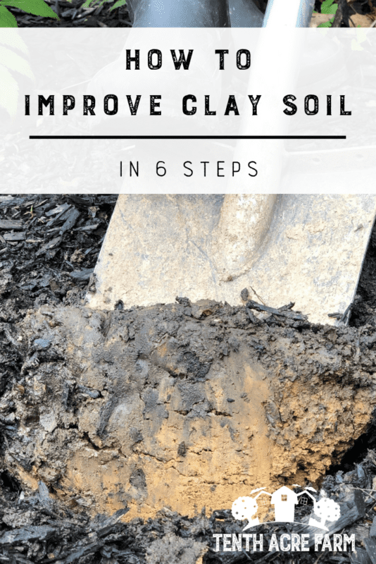 How to Improve Clay Soil in 6 Steps: Heavy clay soil can be frustrating. Follow this 6-step plan to improve soil so you can garden with ease and grow crops that thrive. #gardening #soilfertility