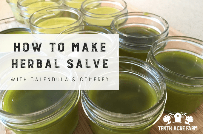 How to Make Herbal Salve with Calendula and Comfrey: Herbal salve is often used for healing skin ailments. Learn how to use herbs from your garden to make a healing herbal salve. #microfarm #herbalism #herbalsalve