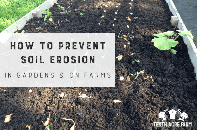 Taking care of the soil is crucial for the long-term viability of gardens and agricultural lands. Here's what's at stake and how to prevent soil erosion. #microfarm #gardening #gardentips #soilerosion #soilfertility #watermanagement