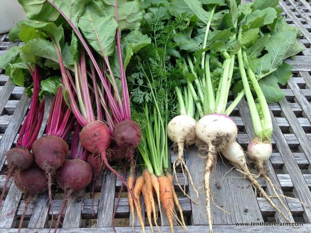 root harvest