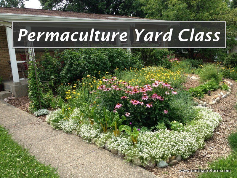 Permaculture Yard Class at Tenth Acre Farm