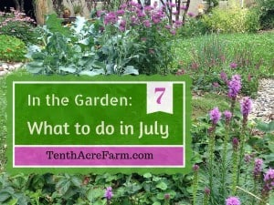 In the Garden- What to do in July