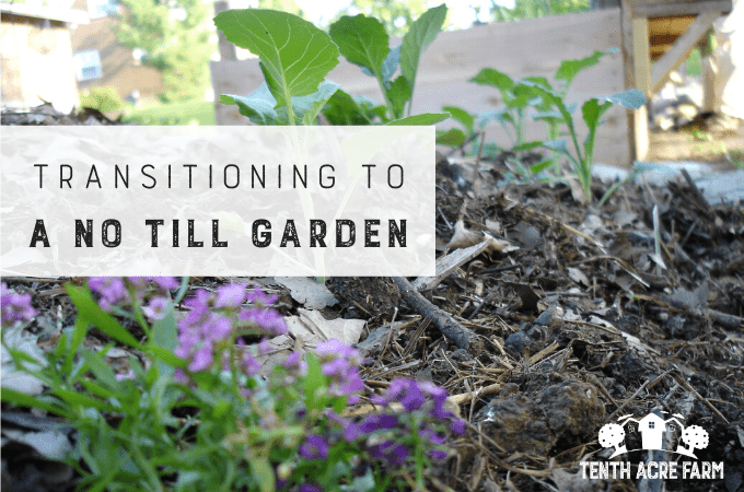 Transitioning to a No-Till Garden: Have you heard about the ecological benefits of the no-till garden? Replace your old habits with these essential steps for a successful transition.