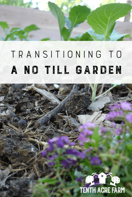 Transitioning to a No-Till Garden: Have you heard about the ecological benefits of the no-till garden? Replace your old habits with these essential steps for a successful transition. #microfarm #permaculture #soilhealth #notillgardening