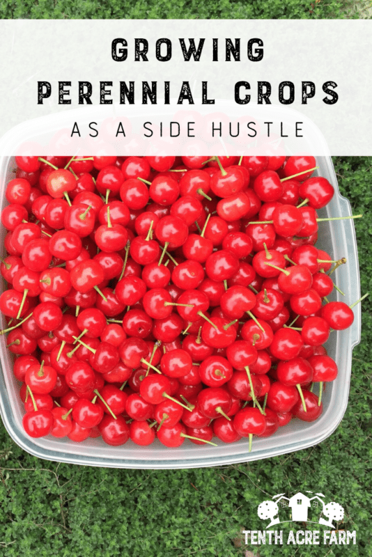 Growing Perennial Crops as a Side Hustle: Would you like to make money from your garden doing something you love? Here are six ways to grow perennial crops as a side hustle. #perennialcrops #permaculture #sidehustle