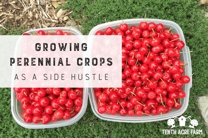 Growing Perennial Crops as a Side Hustle: Would you like to make money from your garden doing something you love? Here are six ways to grow perennial crops as a side hustle.