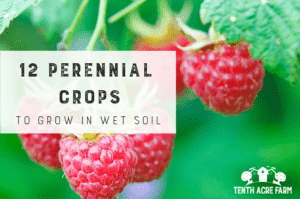 12 Perennial Crops to Grow in Wet Soil