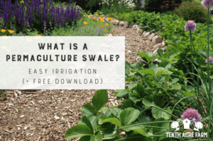 A permaculture swale is a technique that captures water for irrigation and slowing runoff. Learn what a swale is and why you might need one in your yard. #permaculture #conservation
