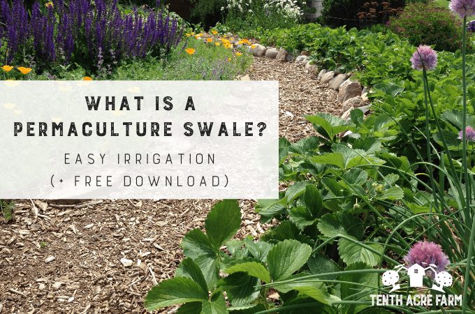A permaculture swale is a technique that captures water for irrigation and slowing runoff. Learnwhat a swale is and why you might need one in your yard. #permaculture #conservation