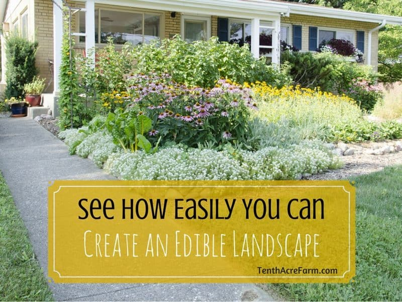 edible landscaping is an easy way to grow food while keeping a front