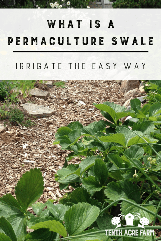 Irrigate the Easy Way: A permaculture swale is a technique that captures water for irrigation and slowing runoff. Learn what a swale is and why you might need one in your yard. #permaculture #conservation