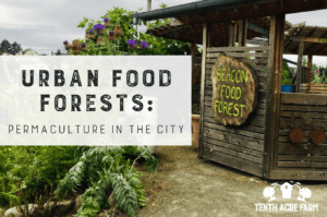 Urban Food Forests: Demonstrating City Permaculture