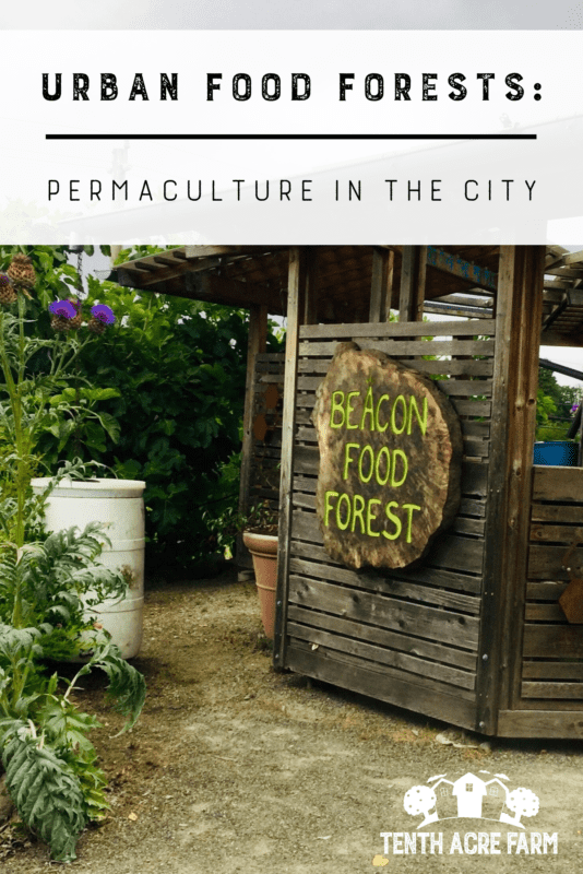 Urban Food Forests: Demonstrating Permaculture in the City — Food forests are permaculture gardens consisting of edible perennials. Find out how two urban food forests are shaking up the local food movement. #permaculture #urbangardening #foodforests