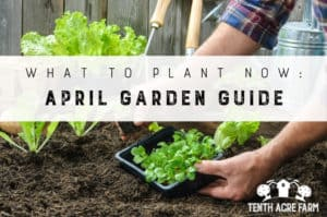 What to Plant Now: April Garden Guide