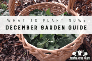 What to Plant Now: December Garden Guide