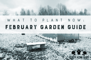What to Plant Now: February Garden Guide