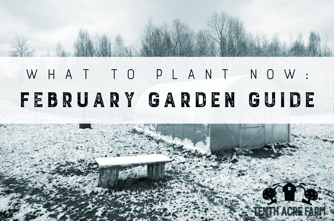 What to Plant Now: February Garden Guide — Are you determined to get a jumpstart on the gardening season this year? In this February Garden Guide, find out what to do this month to have a successful garden.