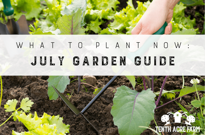 What To Plant Now: July Garden Guide