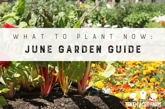 What To Plant Now: June Garden Guide