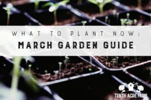 What to Plant Now: March Garden Guide