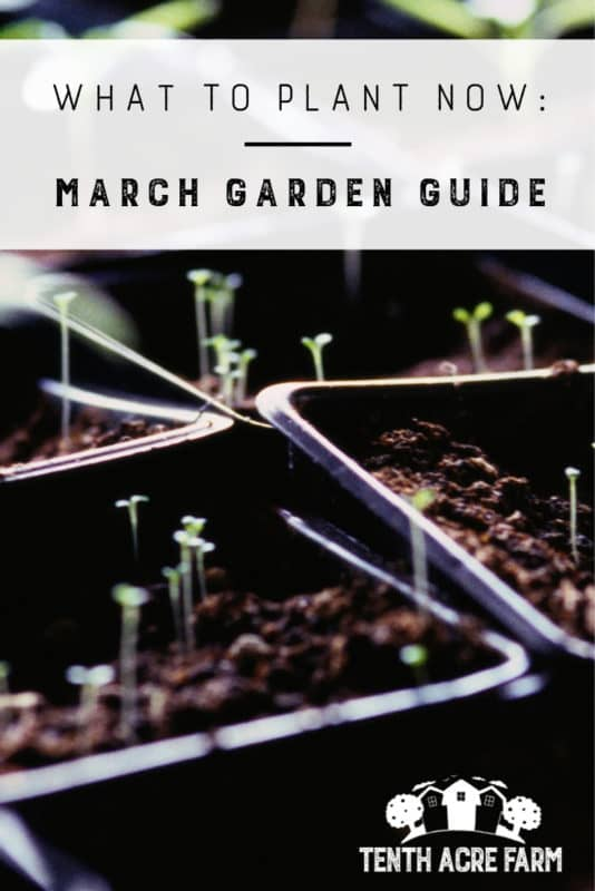 What to Plant Now: March Garden Guide — Welcome to March! Can you feel spring in the air where you live? Are you ready to start digging in the dirt? In this March Garden Guide, I share what you need to know to have a great spring garden.