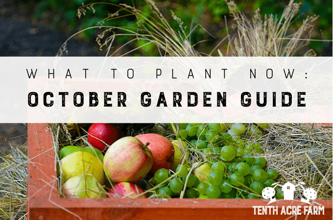 What to Plant Now: October Garden Guide - Whether you planted a fall garden or are putting your garden to bed for the season, here's what to do in October.
