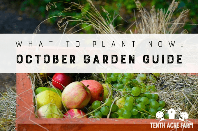 Whether you planted a fall garden or are putting your garden to bed for the season, here's what to do in October.