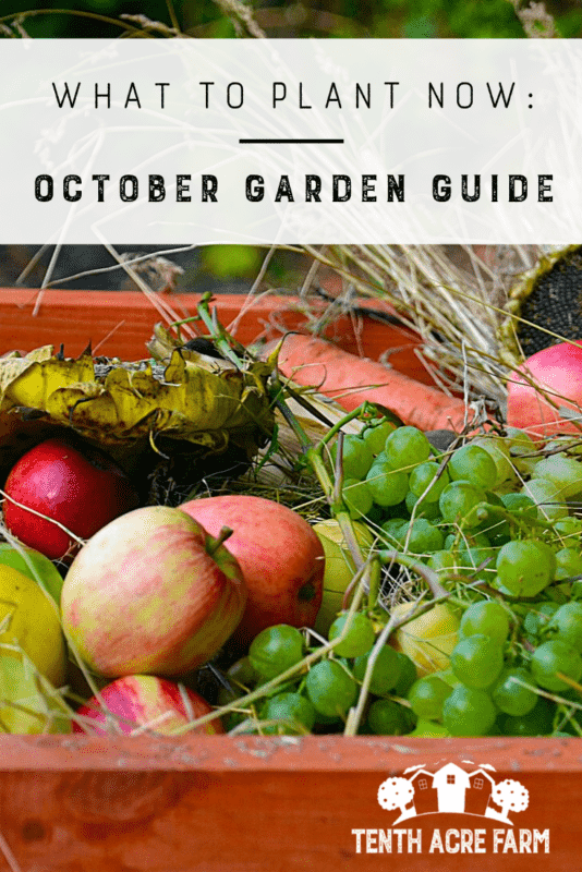 What to Plant Now: October Garden Guide - It's fall! Whether you planted a fall garden or are putting your garden to bed for the winter, there are plenty of tasks to keep you busy in October. Here are some ideas for managing your garden this month.