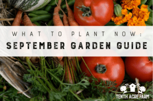 What to Plant Now: September Garden Guide