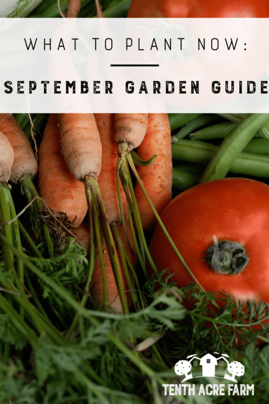 September is the month to get caught up in the garden. Here's what to do!
